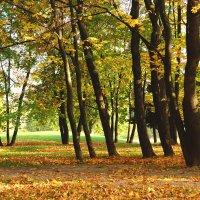 Осенний день :: Юлия Мов...