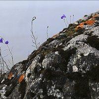 На севере диком :: galina bronnikova