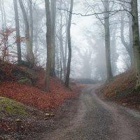 туман - это красиво :: Elena Wymann
