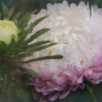 В царстве цветов и грёз. :: Инна Малявина