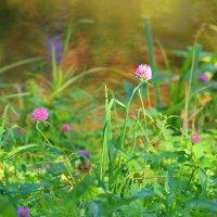 Солнечное настроение сентября..... :: Tatiana Markova