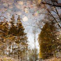 Осенние лужи города N (II) :: Алексей (АСкет) Степанов