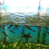 Рыбки-массажистки... :: Алекс Аро Аро