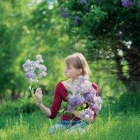 Сирень цветёт :: Вера Сафонова