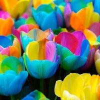 голландские цветоводы большие затейники :: Эльвира Лопатина