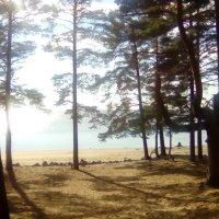 Побережье Финского залива. (п. Репино, сентябрь 2016 г.). :: Светлана Калмыкова