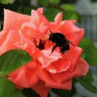 Пчелка на цветке :: Nataliya Oleinik