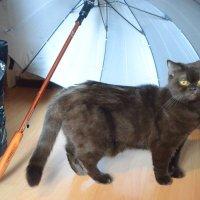 модель под зонтиком :: Ольга