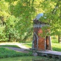 Зеленеющая осень..... :: Tatiana Markova