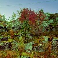 осень на скалах :: Сергей Кочнев