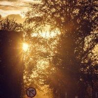 В воздухе словно рассеяли медную пыль... :: Дмитрий Костоусов