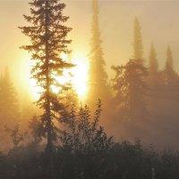 Солнце выкатилось :: Сергей Чиняев