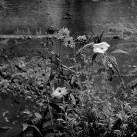 Городские цветы....... :: Валерия  Полещикова