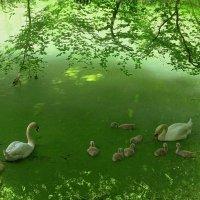 Последний день весны (серия) Когда лебеди были малышами :: Nina Yudicheva