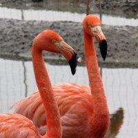 Красный фламинго. :: Вадим Синюхин