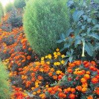 Море цветов :: татьяна