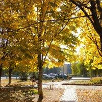 осень золотая... :: татьяна