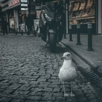 Отважный птиц!...улочками Стамбула. :: Александр Вивчарик