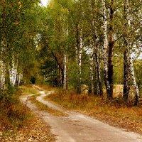 по дороге в лес :: Александр Прокудин