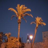 У стены Старого города Иерусалима. :: Alla