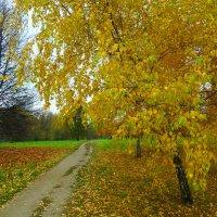 Осенний наряд. :: Александр Атаулин