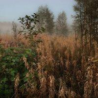 Вечерний туман :: Ирина Климова