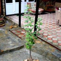 Садовые выкрутасы :: A. SMIRNOV