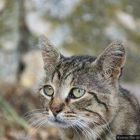 Даже коты умеют грустить :: Миша Кравец