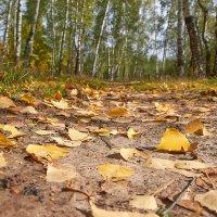 вот и осень пришла :: Седа Ковтун