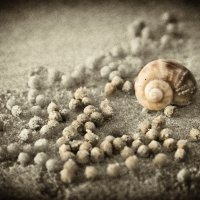 Пляжный натюрморт :: Alexander Dementev
