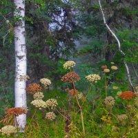 На лесной опушке :: Сергей Чиняев