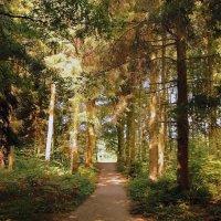В осеннем лесу :: Alexander
