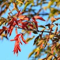 Осенние краски. :: Paparazzi