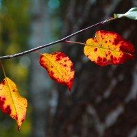 Краски сказочной Осени... :: Виктор Бусель