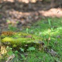 Весь покрытый зеленью... :: Александр Морозов