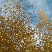 Осень...осень... :: марина ковшова