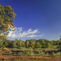 Клен на берегу старого пруда :: Лариса Шамбраева