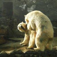 Пражский зоо :: Galina Belugina