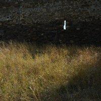 Трава у крепостной стены :: Наталья Покацкая