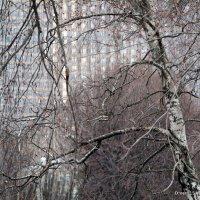 ритмы города-оттенки,фрагменты :: Олег Лукьянов