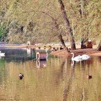 Озеро :: Аркадий