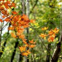 Здравствуй, Осень-краса! :: Tatyana Belova