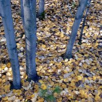 Наша осень :: Виктор Коршунов