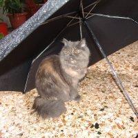 Я под зонтиком,дождика не боюсь! :: Оля Богданович