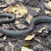 Измайловский змей :: Длинный Кот