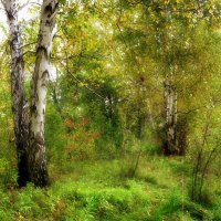 В лесу,,, :: Ольга Кондратова