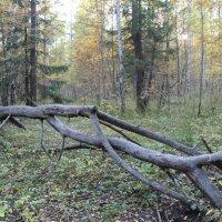 В лесах у Гайвы :: Валерий Конев
