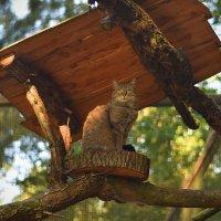 Очень дикий кот :: Ольга Диброва