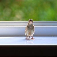 в гости :: linnud