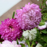 Цветы в моём саду :: Светлана Сметанина